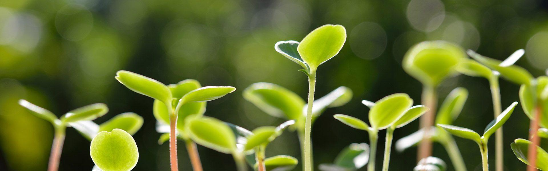 nye-planter